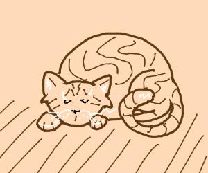 sleeping brown cat