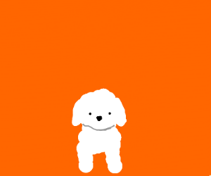 Poofy white puppy