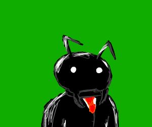 posh ant