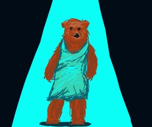 bear in dress