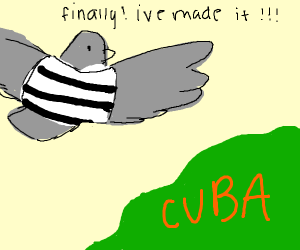 bird prisoner escaped and made it to cuba