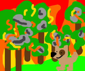 dog in the middle of a forest fire