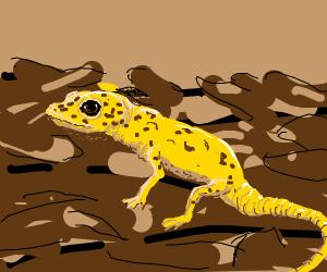 a yellow gecko