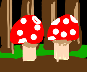 two mushrooms in a forest!!