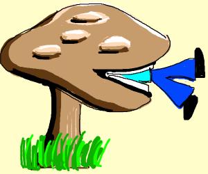 A Giant mushroom eats a person