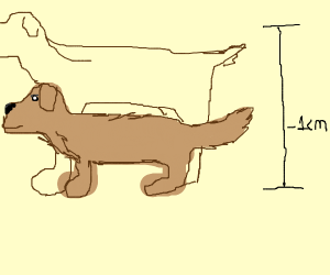 Really short dog