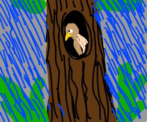 Bird in a Monsoon