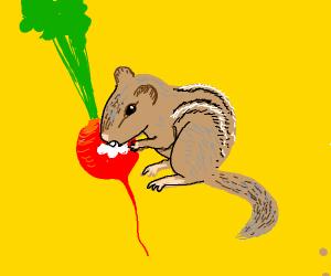 Chipmunk eating a Radish