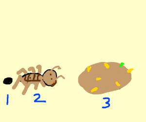 Metamorphosis of the potato bug