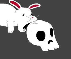 bunny chews on a skull