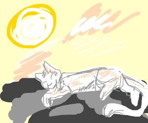 White cat sunbathing