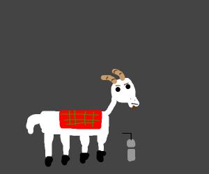 smug hipster goat