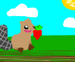 Beaver nibbles on strawberry