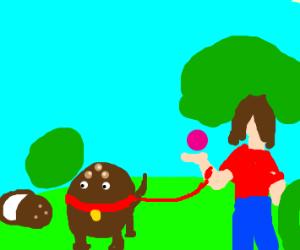 coconut as a dog