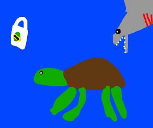 Shark catching turtle