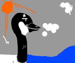 Smirking goose