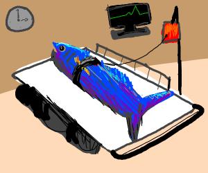 Blue fish in the E. R.