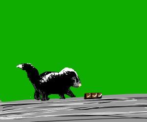 skunk eats choclate