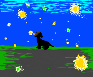 Dog and firefly