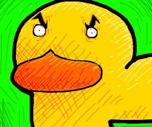 the duck gets up close