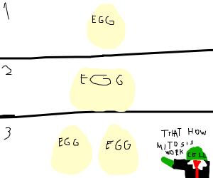 Egg mitosis