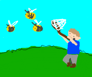 catching bees in a net