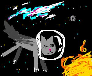 Star Cat