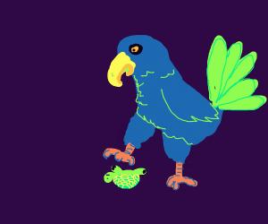 Bluebird assists tiny upside-down turtle.