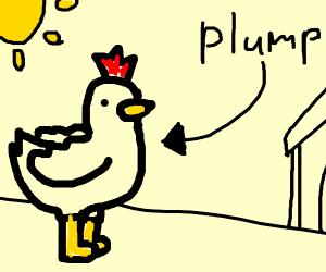 Plump Chicken