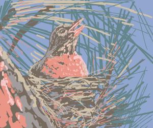 Robin sitting in nest