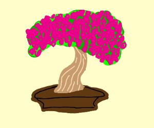 Majestic bosani cherry tree