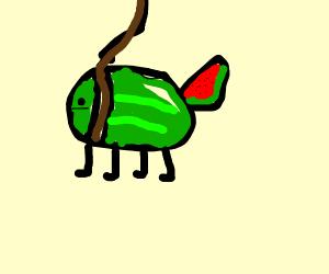 Pet Watermelon