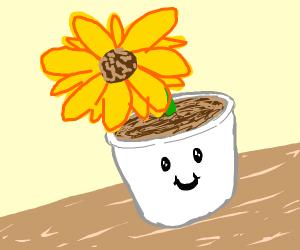 Sunflower in happy pot