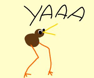 Kiwi birds singing