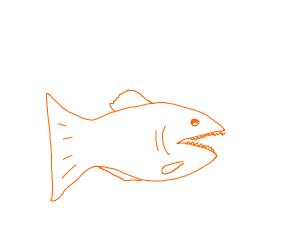 orange pirhanna