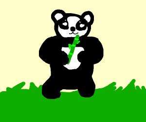 Cute panda eats bamboo