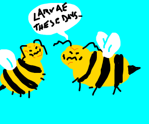 Old bees