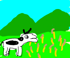 Cow eating wheat