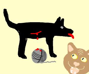dog bleeding over cats yarn