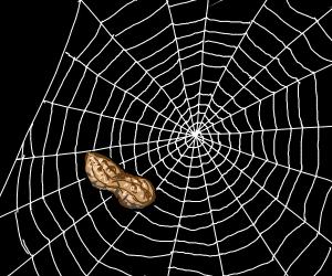 Peanut in a spiderweb