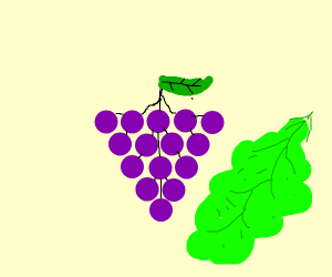Grapes and lettuce