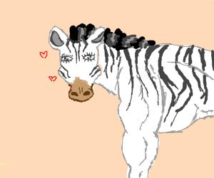 beefy zebra