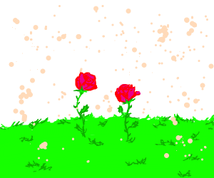 two pink roses in a blank grassland