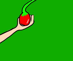 Guy picking tomatoes