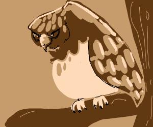 Stoic Hawk