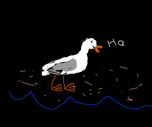 A seagull laughing in complete darkness