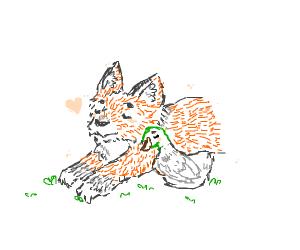fox loves duck