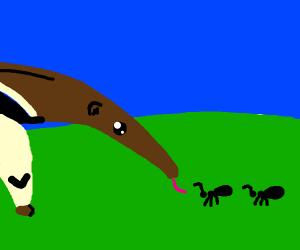 Anteater eating ants