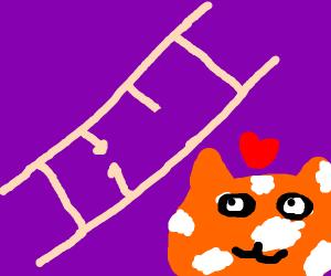 Cat wants to climb the broken ladder