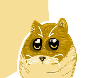 Doge meme but it's a Cat